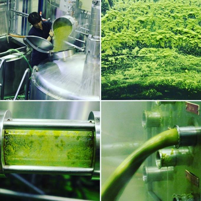 仕込み後の壁、管はホップ粕がベッタリ。棄麦汁も緑!