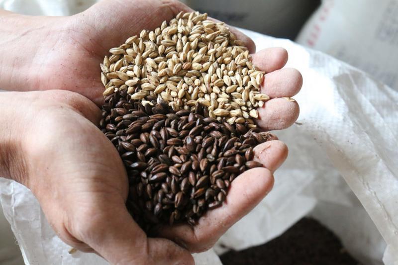 奥がベース麦芽、手前がチョコレート麦芽