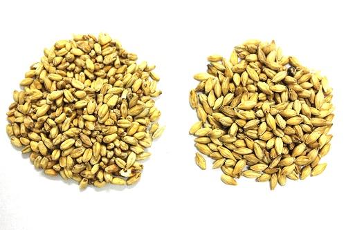 小麦麦芽と大麦麦芽