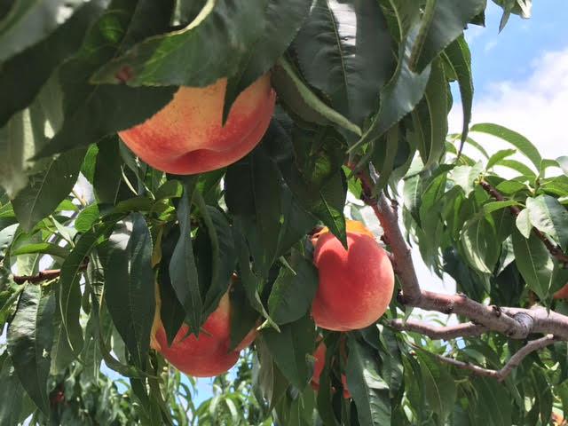 完熟桃のエール