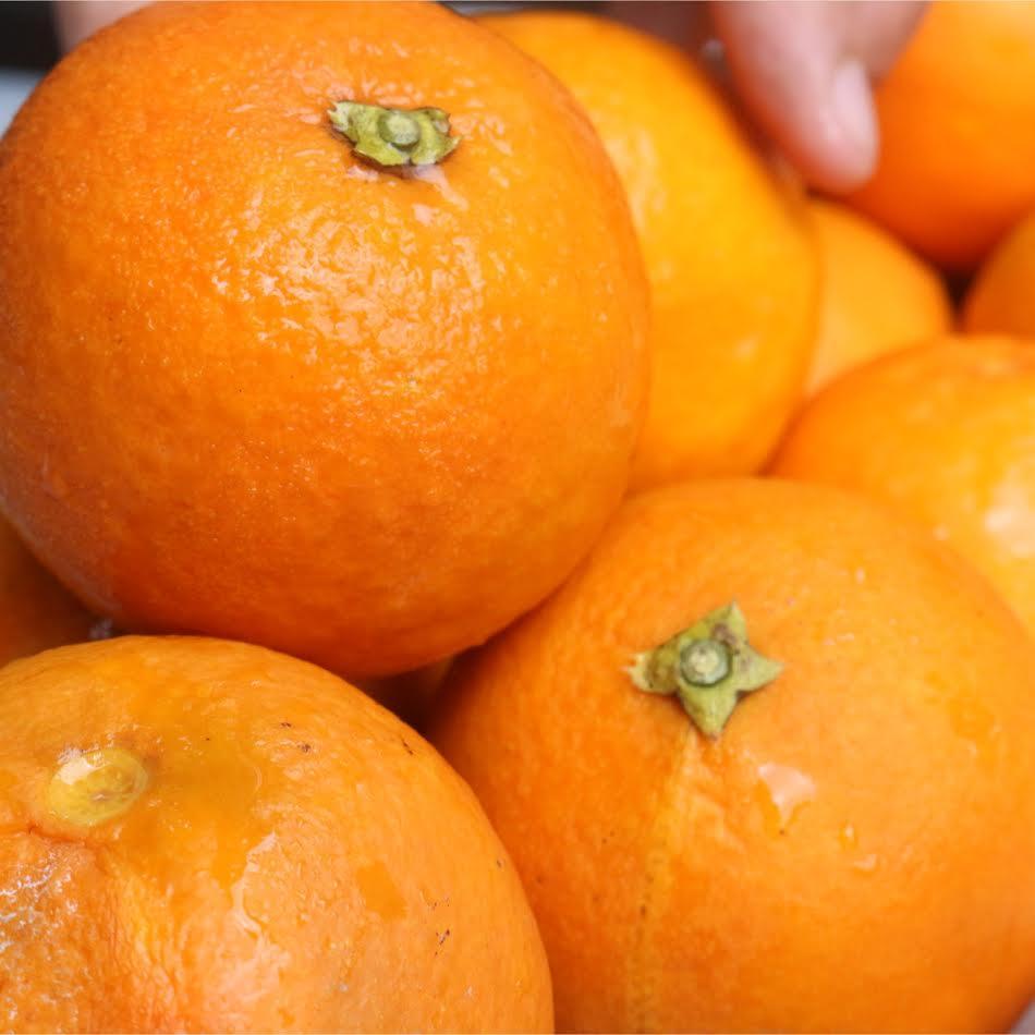 愛媛産ブラッドオレンジ使用